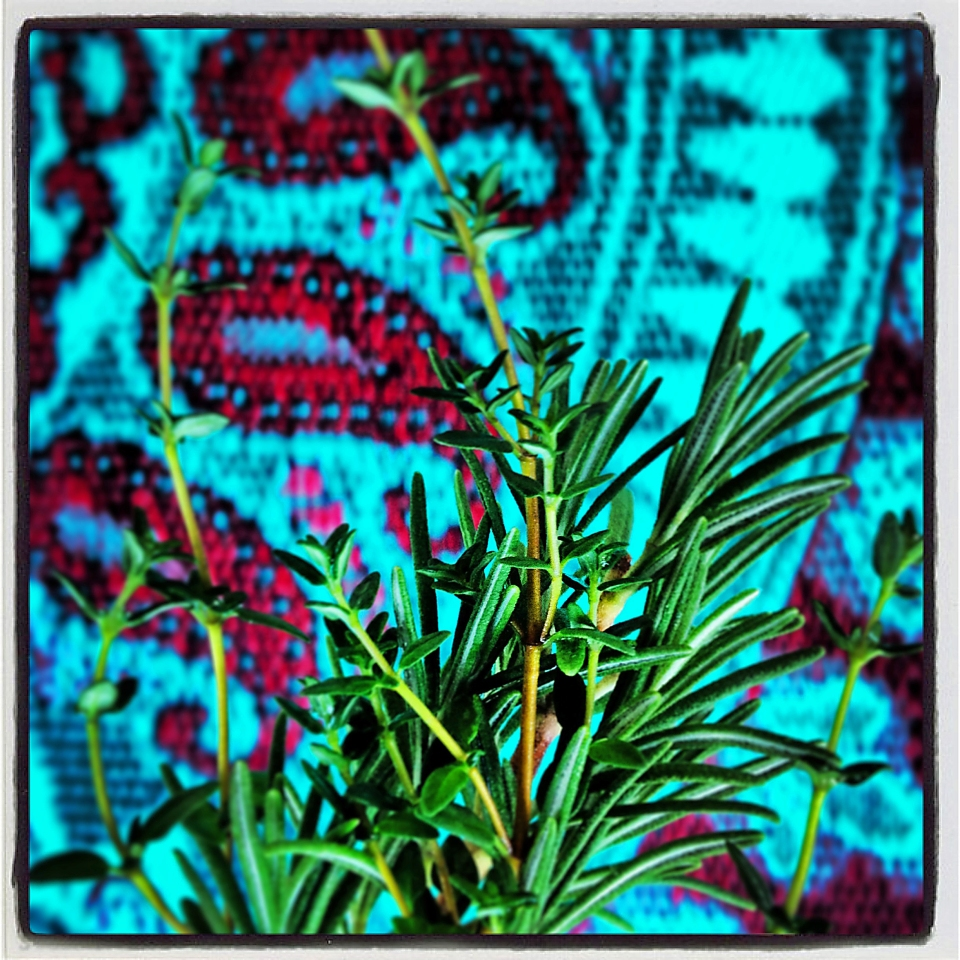 Rosemary is a key ingredient of happy home living. Plant it outdoors and enjoy it when cooking.