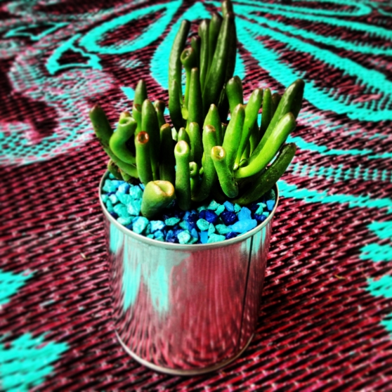 A DIY Succulent Planter Project From Home Style Austin