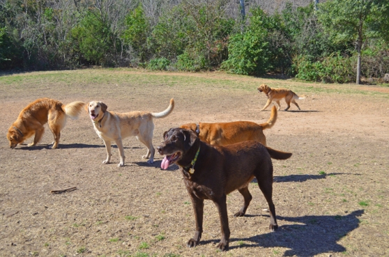The Dogs Of Red Bud Isle Park In Austin, Texas