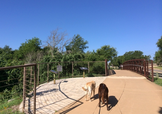 Dogs Walking At Brushy Creek Regional Trail