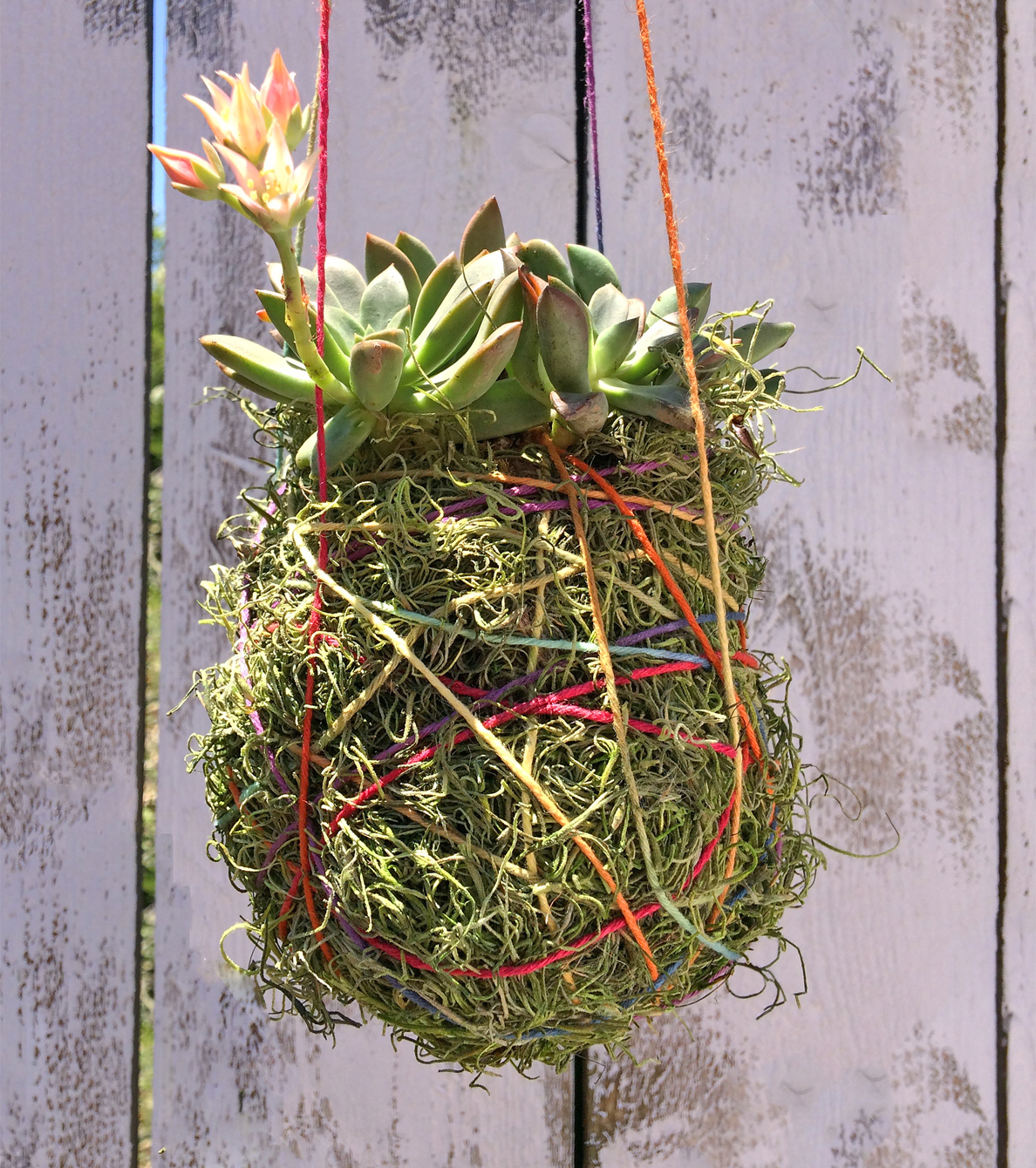 How To Make A Succulent Planter By Home Style Austin