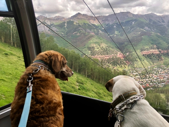 My Dogs Lucca And Libby In Telluride Colorado
